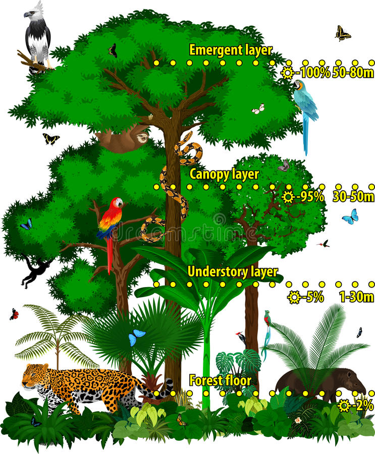 Rainforest jungle layers vector illustration. Vector Green Tropical Forest jungle with different animals. royalty free illustration