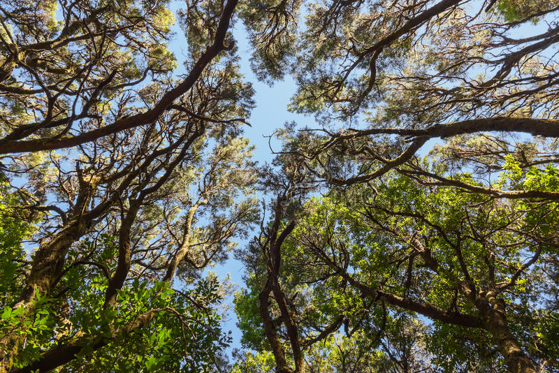 Rainforest in La Gomera island - Canary Spain. Rainforest in Garajonay National Park - La Gomera - Canary islands - Spain royalty free stock photos