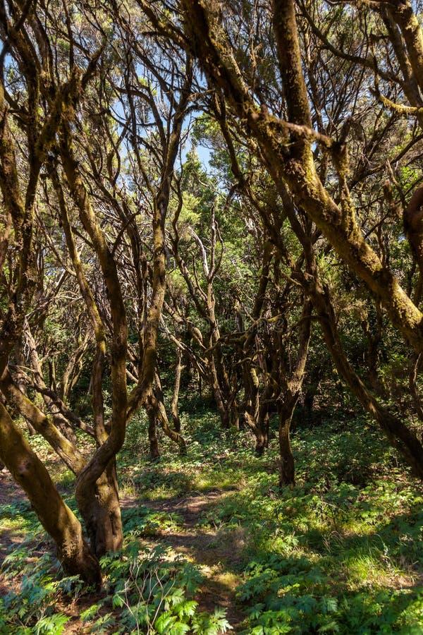 Rainforest in La Gomera island - Canary Spain. Rainforest in Garajonay National Park - La Gomera - Canary islands - Spain stock photography