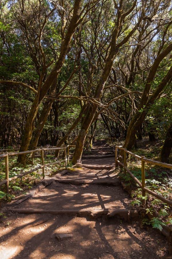 Rainforest in La Gomera island - Canary Spain. Rainforest in Garajonay National Park - La Gomera - Canary islands - Spain royalty free stock photo