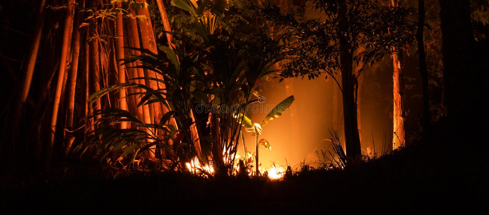 Fire in the jungle. In the rainforest of Papua New Guinea, people often burn garbage and leaf litter around their homes to make it easier and safer to walk stock images