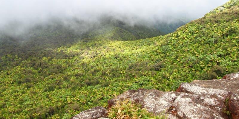 Rainforest Puerto Rico för El Yunque royaltyfria foton