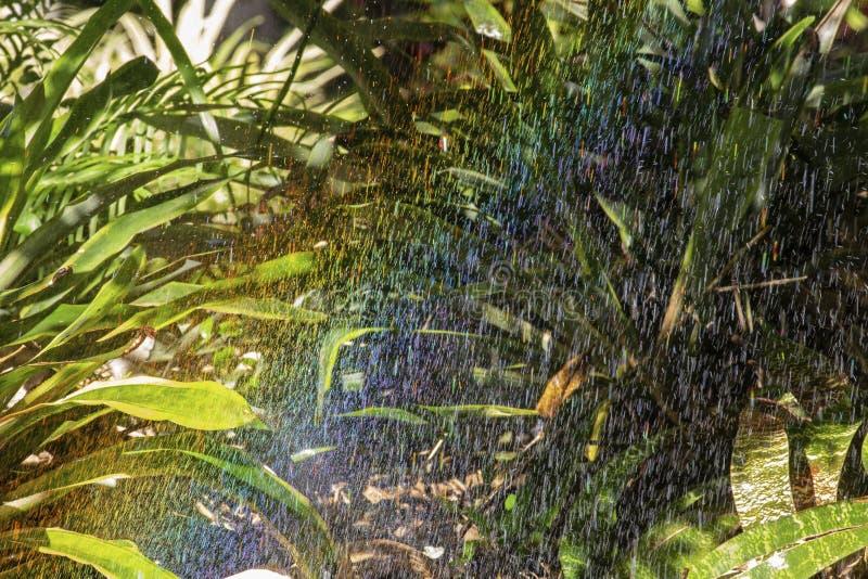 Rainforest Rainbow image libre de droits