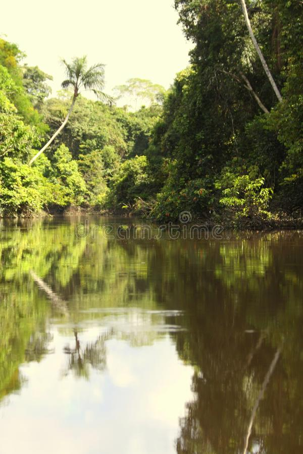 Peru Rainforest River Jungle Scenery. Jungle palms and thick vegetation surround a brown water river in the Varzea forest of the Amazon region in central Peru stock images