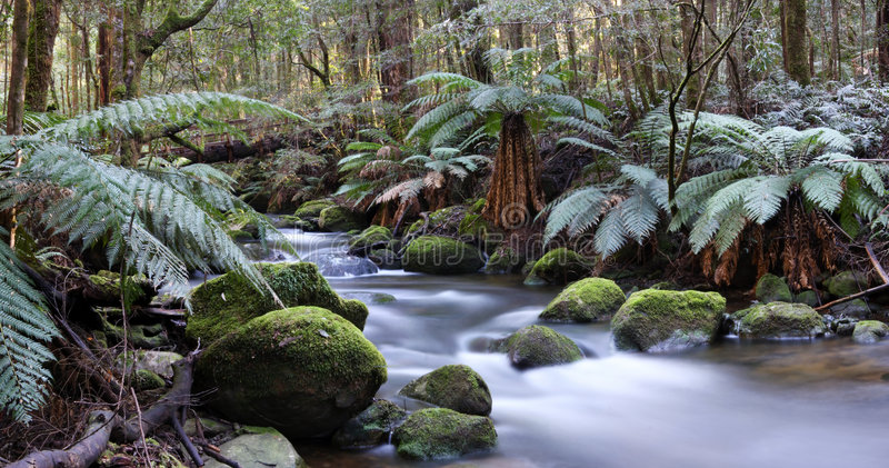 Download Rainforest River Panorama stock photo. Image of beech - 6222364