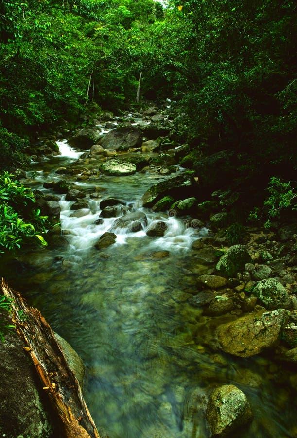 Rainforest Stream stock image