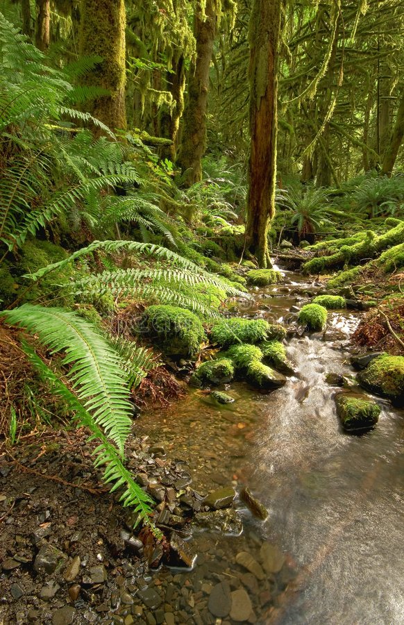 Free Rainforest Stream Stock Photography - 7277862