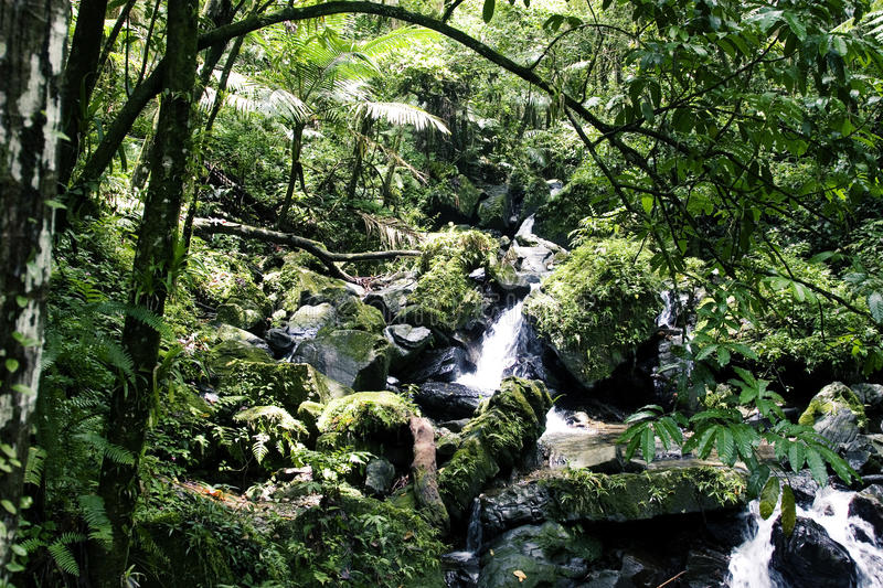 Download Rainforest Stream stock photo. Image of forest, rocky - 9797566
