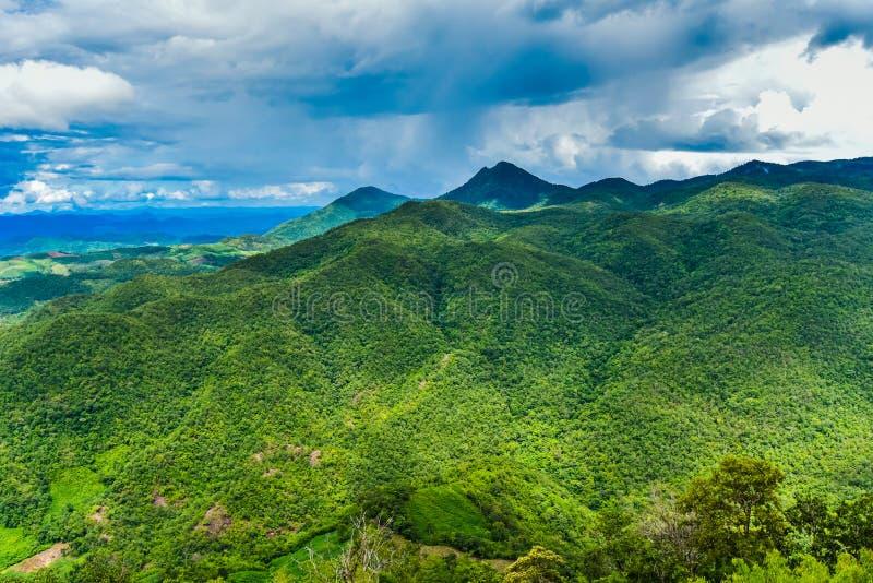 Rainforest Thailand royaltyfri bild