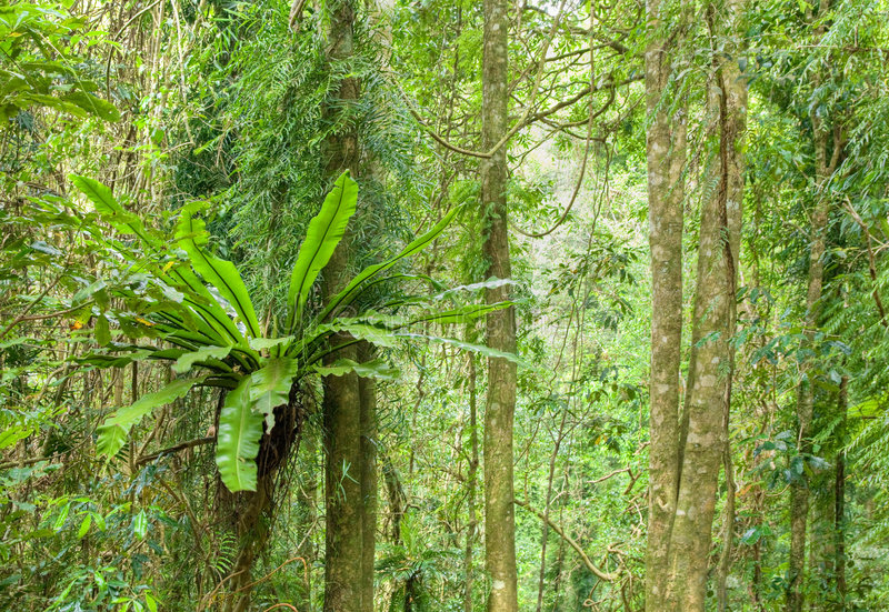 Download Rainforest trees stock photo. Image of heritage, trees - 8308086