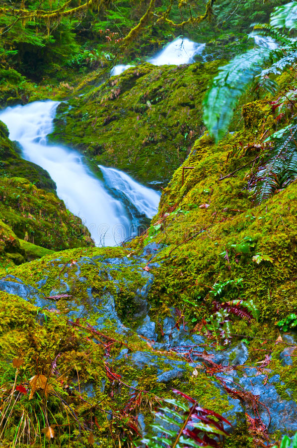 Download Rainforest Waterfall stock photo. Image of rock, forest - 24095202