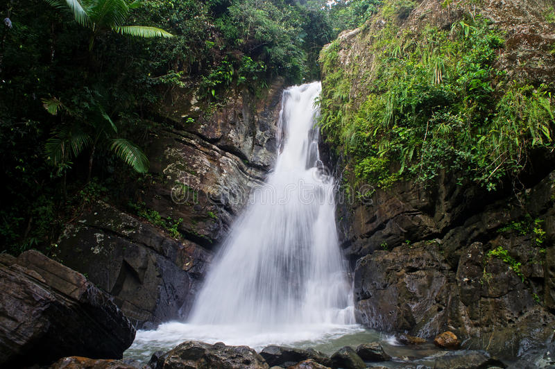Rainforest waterfall in Puerto Rico royalty free stock image