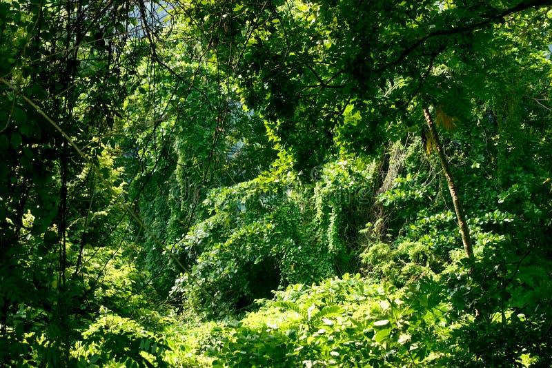 Rainforest1 imagem de stock