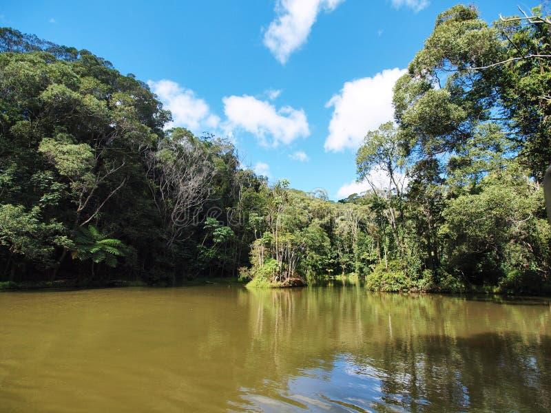 Rainforestation在Kuranda,昆士兰,澳大利亚 图库摄影