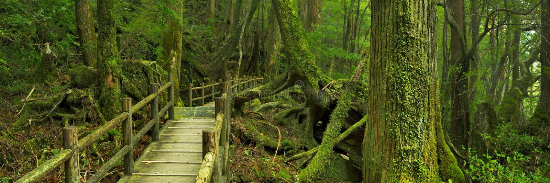 Rainforestbana i Yakusugi land på den Yakushima ön, Japan fotografering för bildbyråer