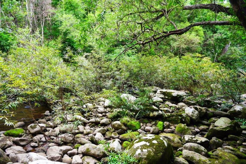 Rainforestdjungeln med vaggar och grön mos i den lösa tropiska skogen - landskap för träd för gräsplan för vattenfall för bergflo fotografering för bildbyråer