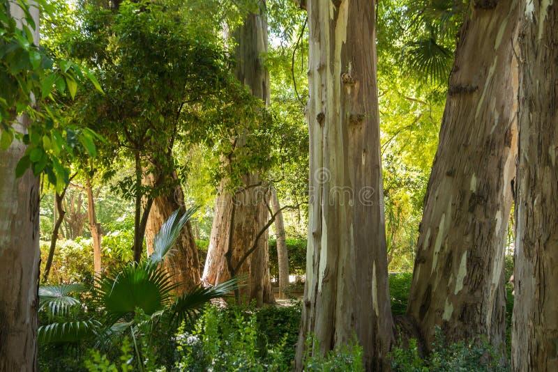 Rainforestträdstammar arkivbild
