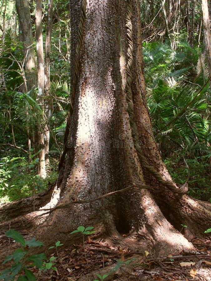 Download Rainforesttree arkivfoto. Bild av buskar, leaves, rygg, tendril - 44340