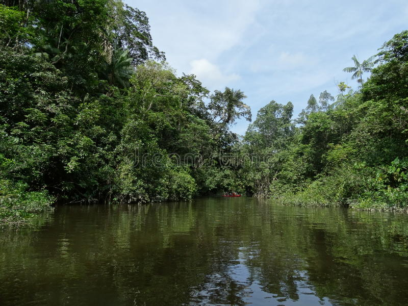 Rainforrest francuza guyane obrazy stock