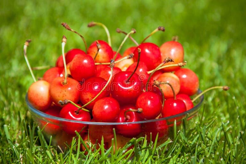 Download Rainier Cherries En Un Cuenco En Hierba Verde Imagen de archivo - Imagen de lindo, ingrediente: 42442039