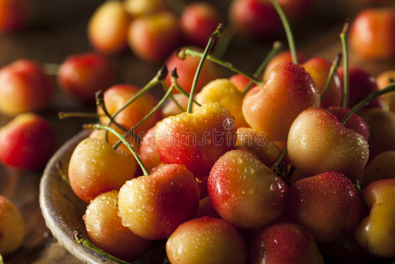 Rainier Cherries orgânico saudável fotografia de stock royalty free