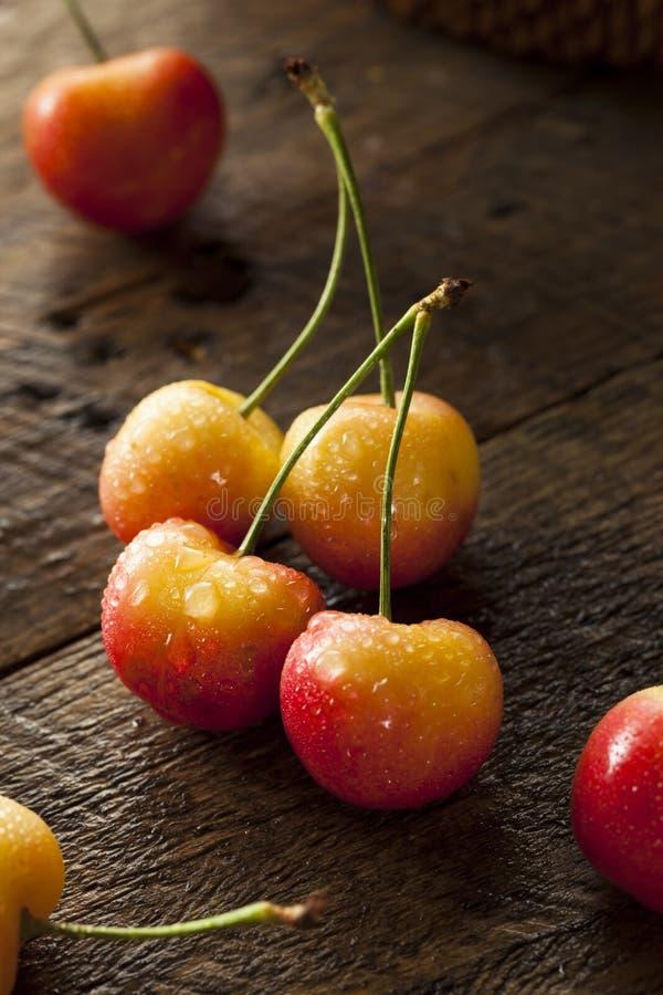 Rainier Cherries orgânico saudável fotografia de stock