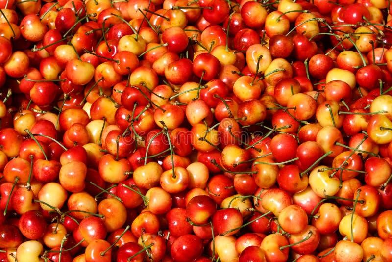 Rainier Cherries vermelho e amarelo colorido fotos de stock