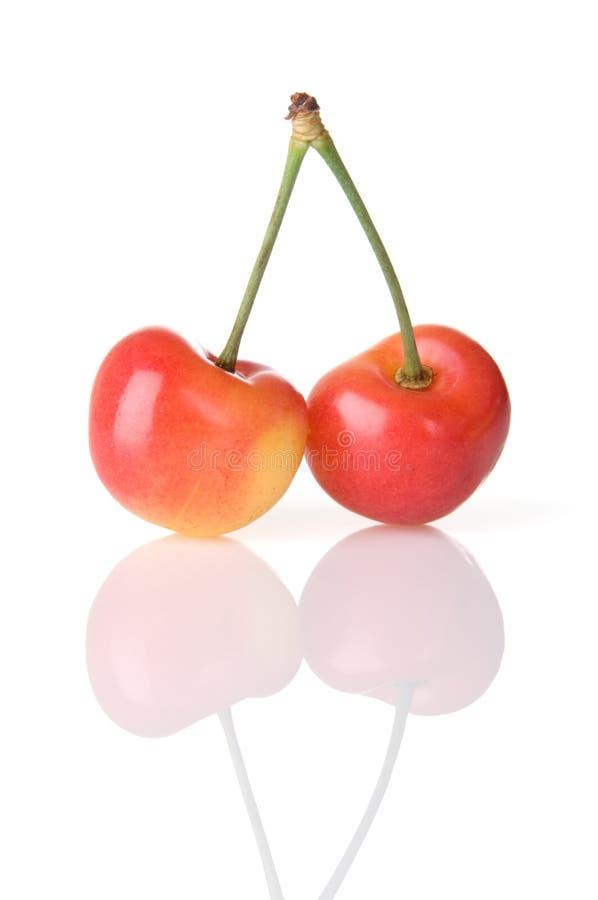 Rainier Cherry Duo stock image