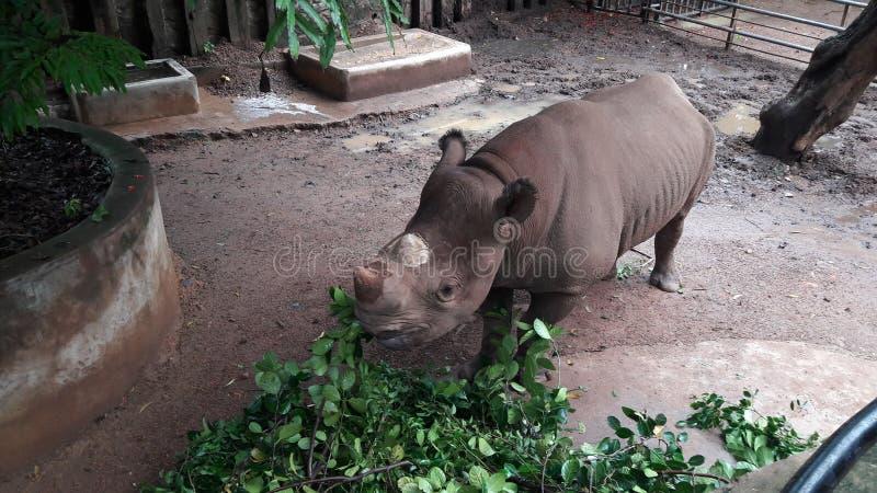 Raino au zoo image libre de droits