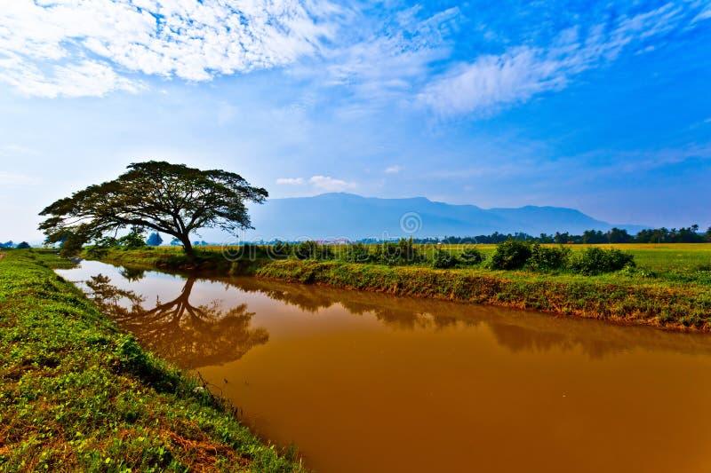 Raintree, het Gebied van de Padie en het Kanaal van de Irrigatie royalty-vrije stock foto's