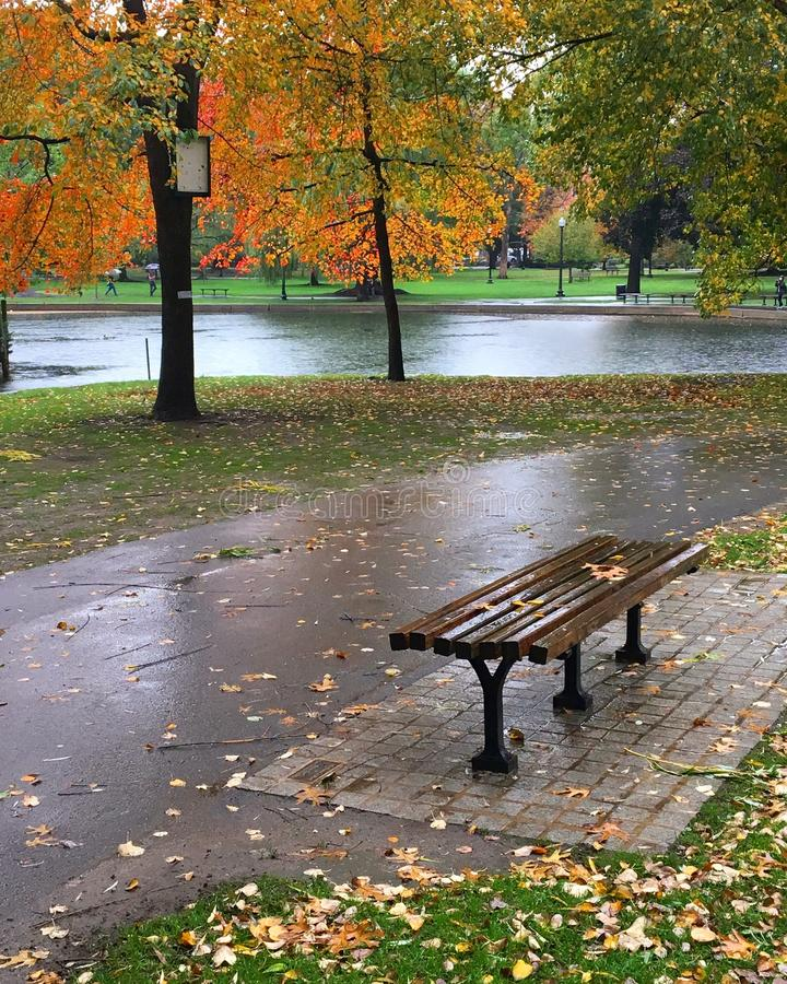 Rainy Autumn Bench. A bench in the Boston Publik Garden awaits a sitter on a rainy fall day royalty free stock images