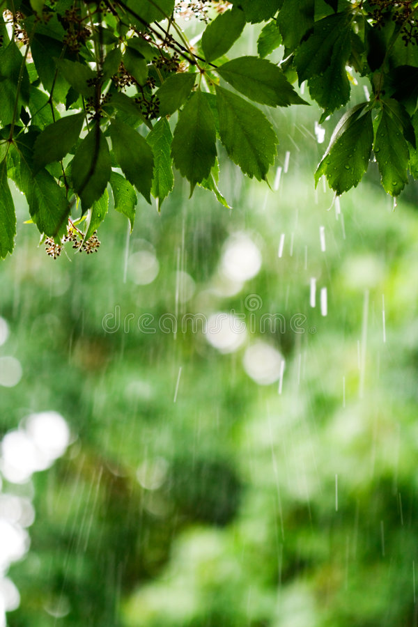 Download Rainy day stock image. Image of leaves, weather, green - 1713583