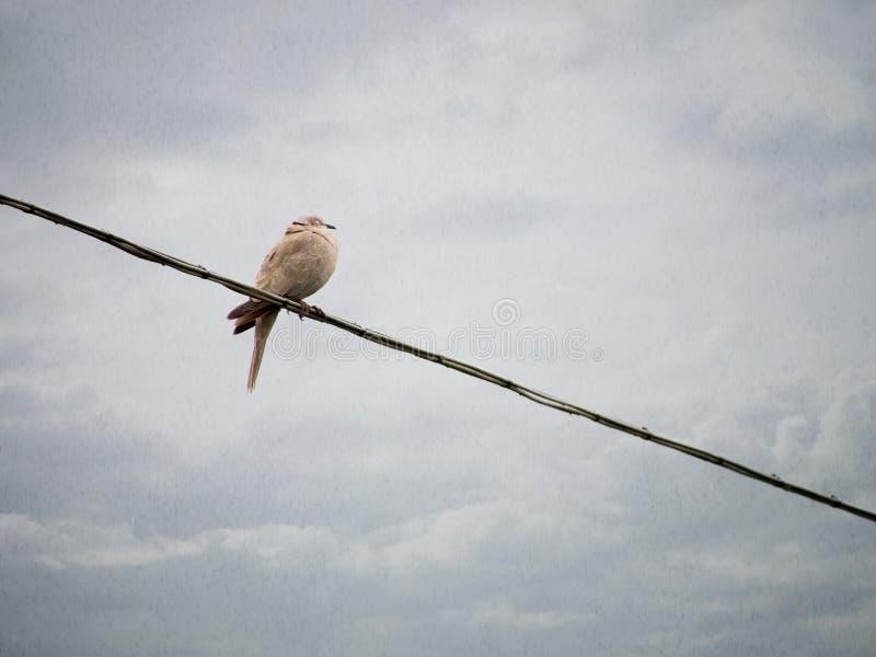 Rainy day bird background. stock image. Image of alone - 73191033