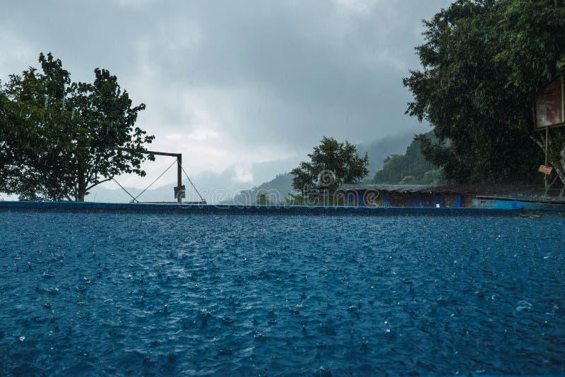 Rainy day among the jungle stock photo