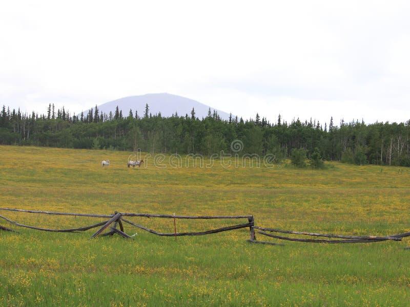 Rainy Day Pasture royalty free stock photos