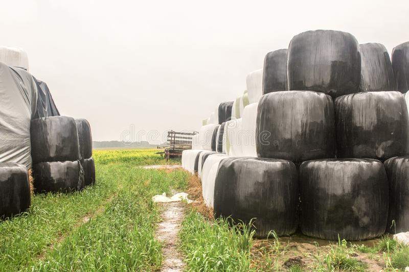Rainy day. Round bales of silo wrapped in a black and white membrane and stacked like two pyramids. royalty free stock photography