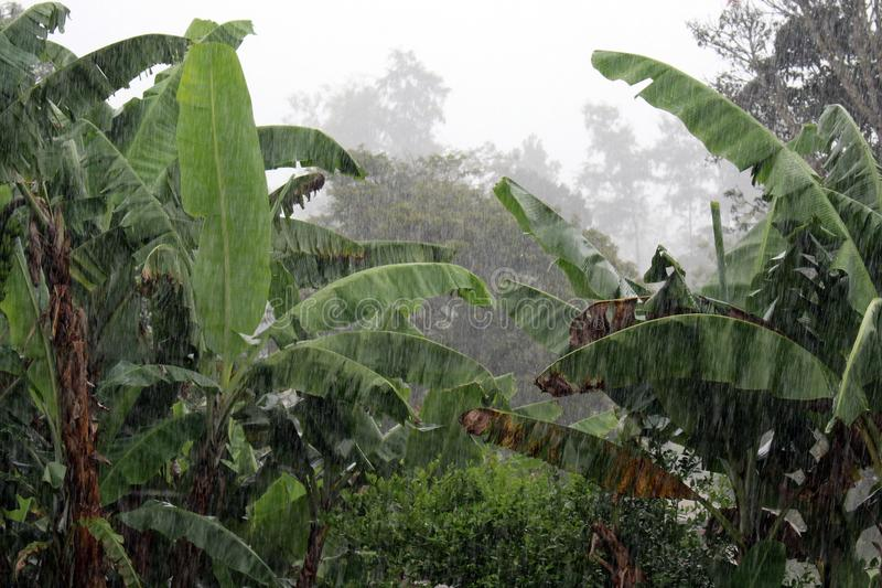 Rain in Papua New Guinea. A rainy day in the tropical island of Papua New Guinea royalty free stock photo