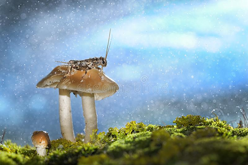 Rainy day in the woods royalty free stock image