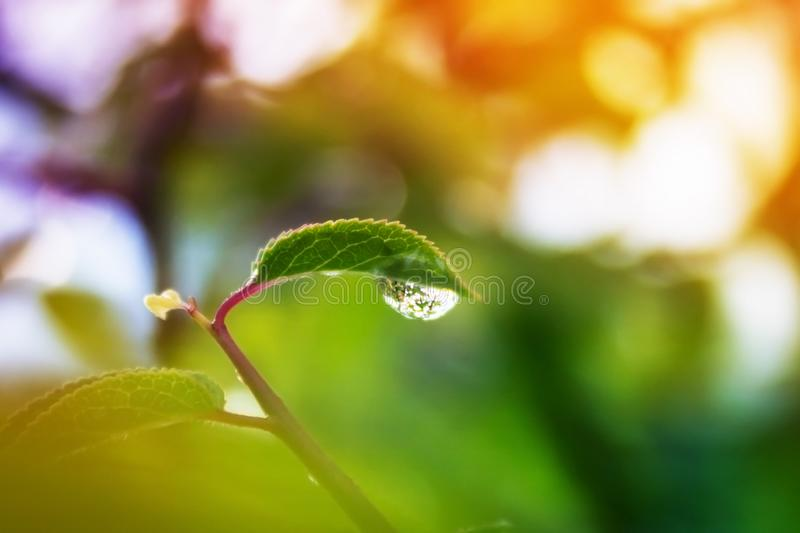A multicolored leaf with a drop of dew. Macro photo droplets royalty free stock image