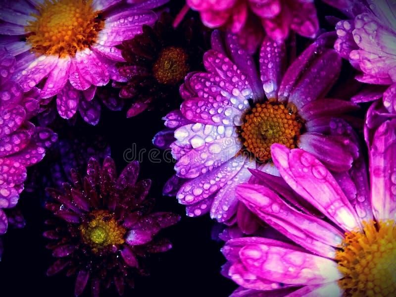 Rainy Flowers royalty free stock photography