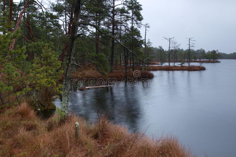 Rainy morning in Kakerdaja Bog royalty free stock photography