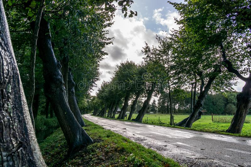 Rainy oblique trees at street stock photos