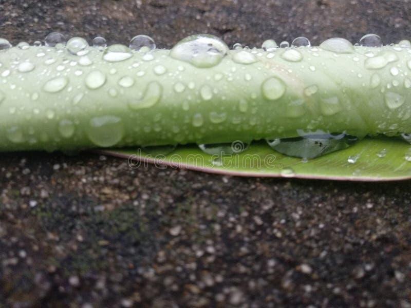 Rainy royalty free stock photography