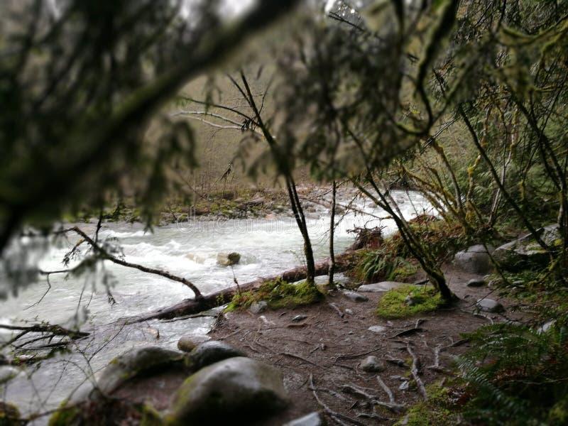 Rainy rainforest stock photos