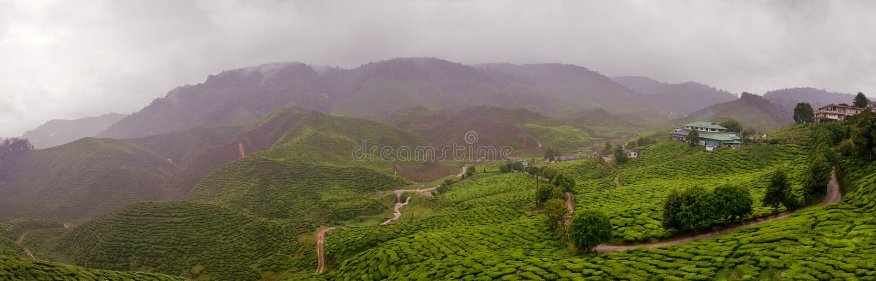 Rainy Tea Estate in Malaysia royalty free stock images