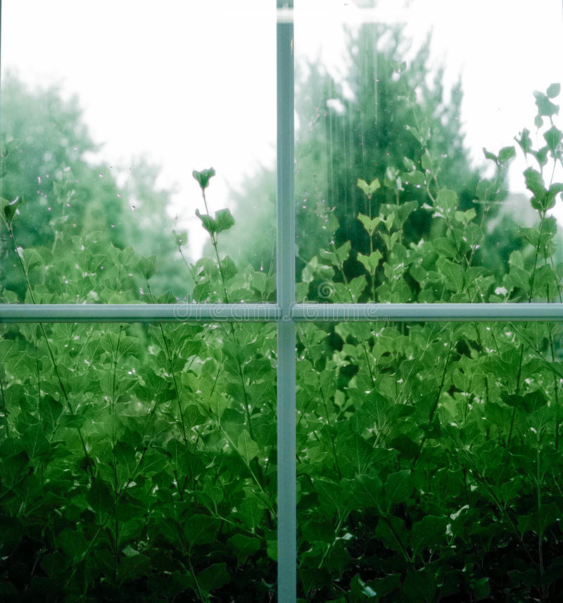 Rainy Window With Plants stock photo