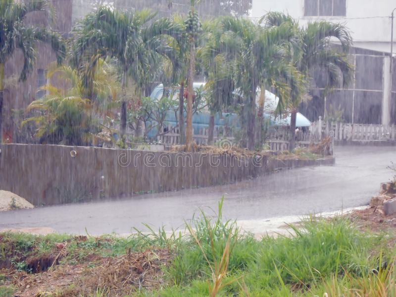 Rainyday Showers of Rain. Visible heavy rain dumping water on driveway on a wet rainy day. Palm tree planted on higher ground retained by concrete wall stands royalty free stock images