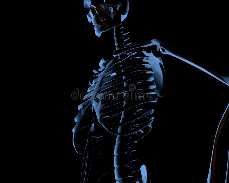 Raio X de esqueleto humano ilustração stock