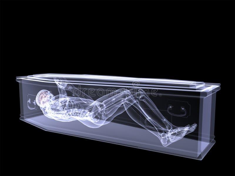 Raio X de esqueleto - prendido em um caixão ilustração do vetor