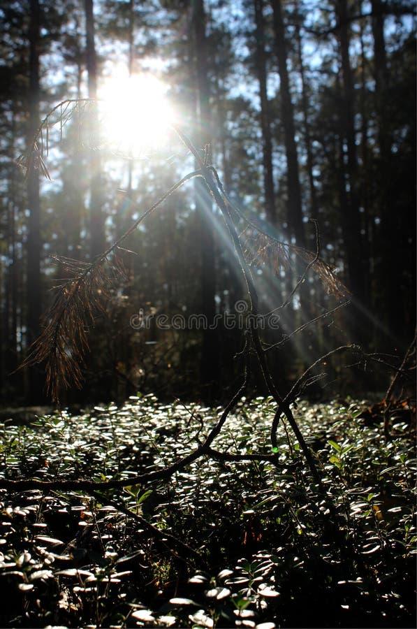 Raio de sol do outono no parque fotos de stock